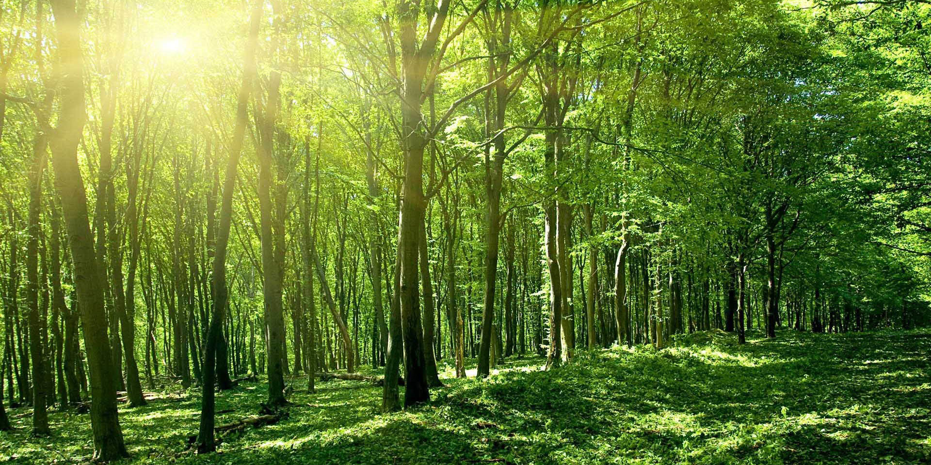Green-Forest-Image